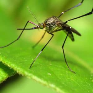 les astuces pour se protéger des moustiques
